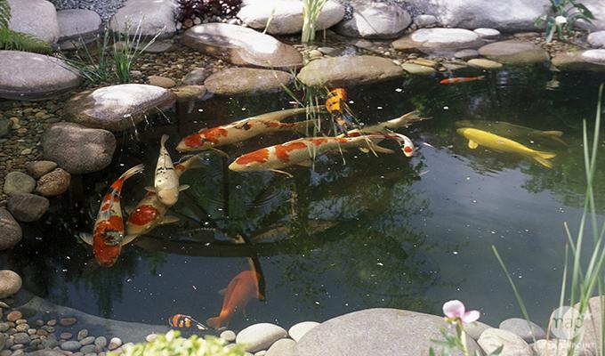 bassin a poissons exterieur