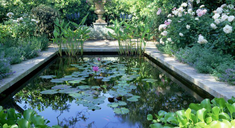 bassin dans jardin