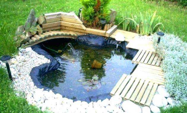 bassin exterieur pour poisson
