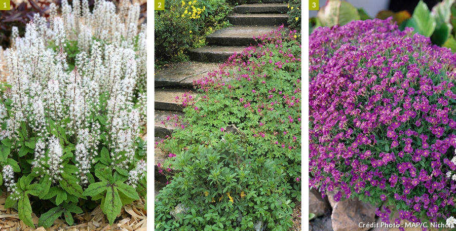 bordure pour plantes