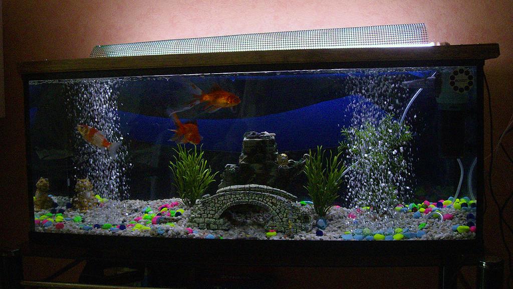 bulleur aquarium solaire
