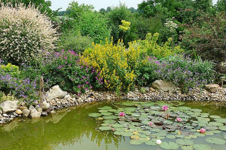 creation d'un bassin de jardin