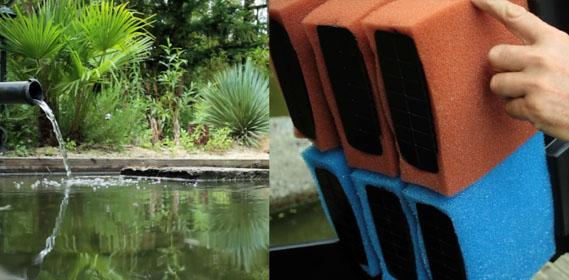 eau verte dans bassin de jardin
