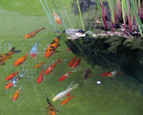 hibernation des poissons