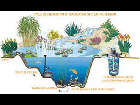 jardin filtre bassin