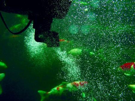 oase swimskim 50