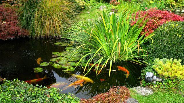 plantation bassin aquatique