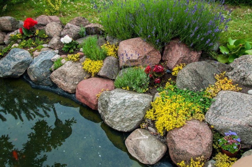 plante bassin de jardin
