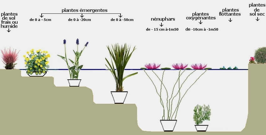 plante de bassin en hiver