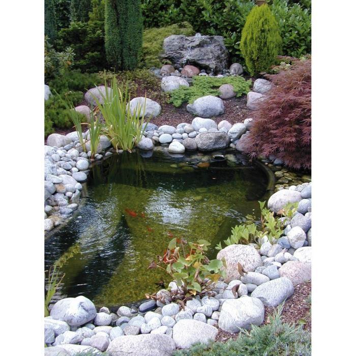 plante filtrante pour bassin exterieur