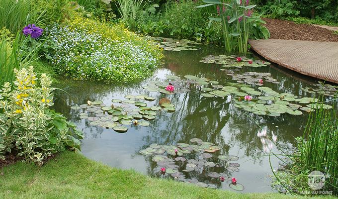 Plante filtrante pour bassin materiel de bassins - Plantes aquatiques pour bassin de jardin ...