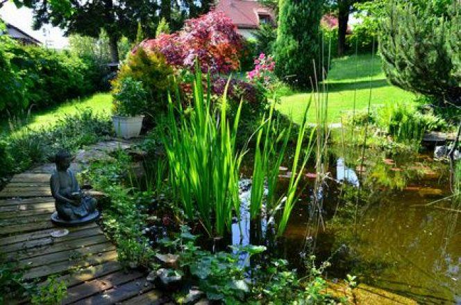 plante pour bassin