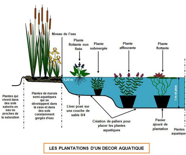 planter dans un bassin