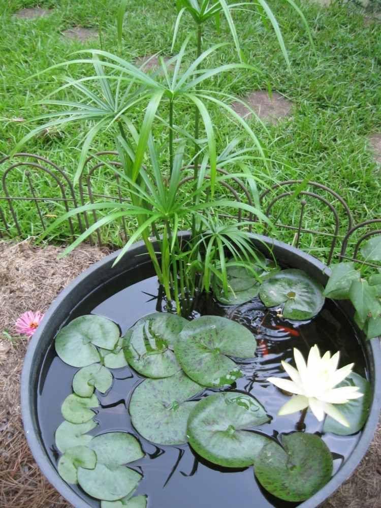 Bouturer un ananas, un jeu denfant… - Osez Planter Ça Pousse
