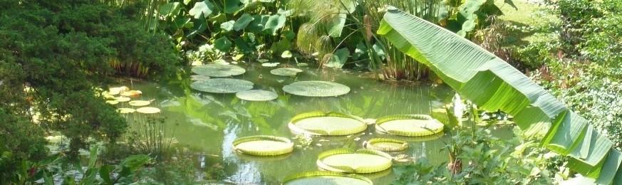 plantes aquatique