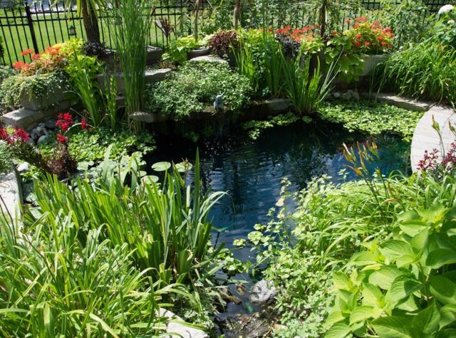 plantes bassin