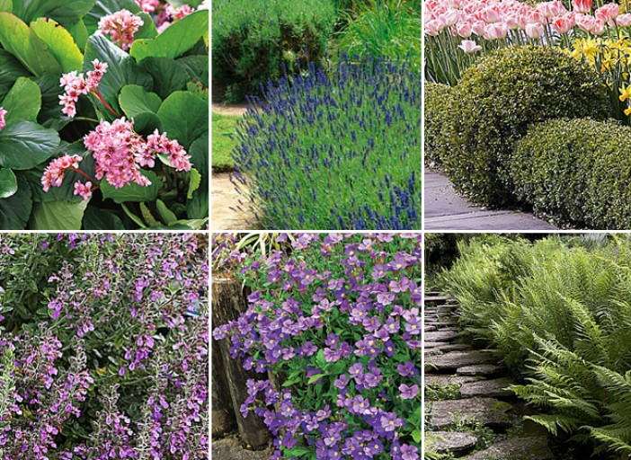 plantes de bordures fleuries