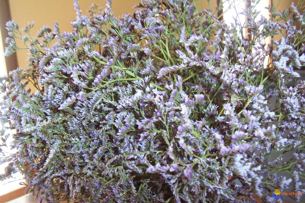 plantes des marais salants a fleurs roses ou mauves