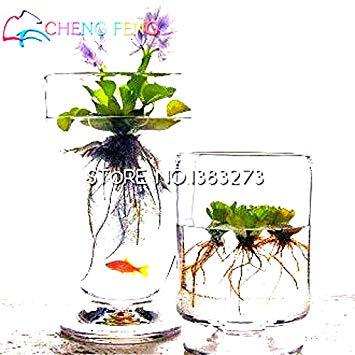 plantes pour etang