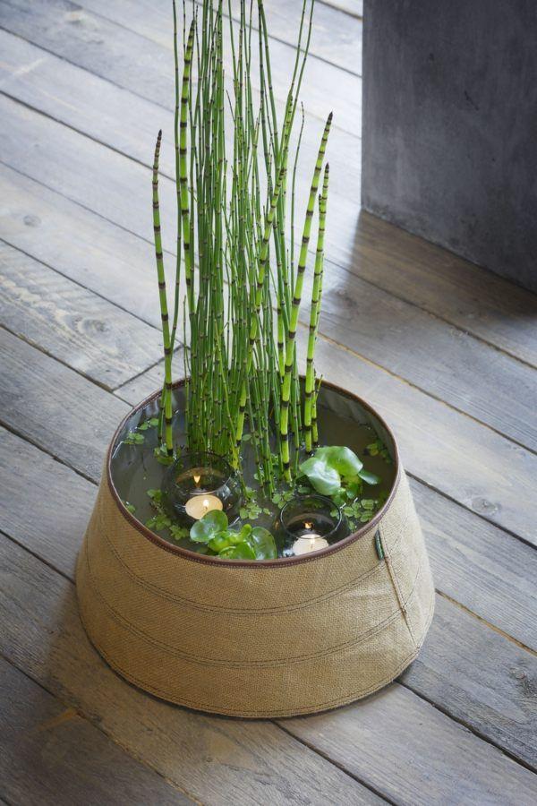 plantes pour etangs