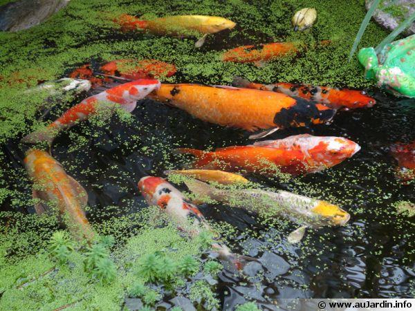 poisson de bassin