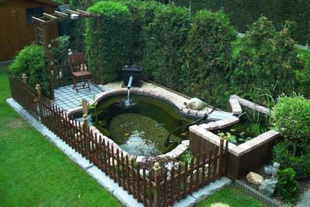 realisation bassin jardin aquatique