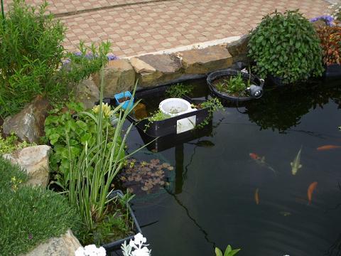 skimmer bassin fait maison