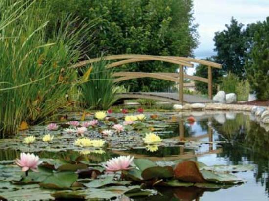 st didier sur chalaronne jardins aquatiques